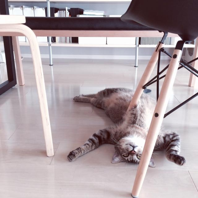 家具を研究中?