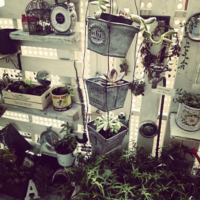 ブリキ鉢の植物を3つ吊るして飾る