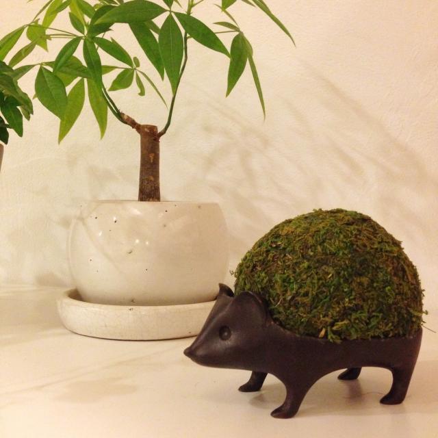 ハリネズミに苔盆栽を