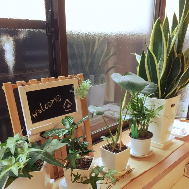 100円で癒し空間作り☆ダイソーで選ぶ観葉植物や小物