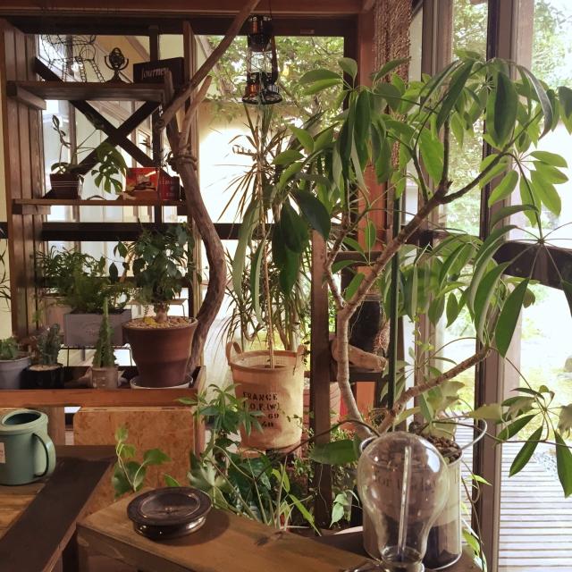 植物が主役!?植物とともに暮らしているお部屋
