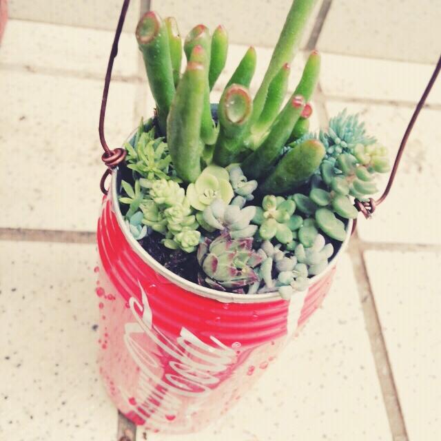 空き缶を鉢植えにリメイク
