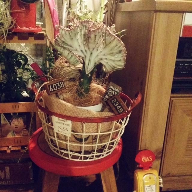 植物の鉢カバーとして