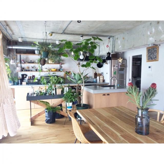植物を主役に♪みんなに見せたくなるステキなお部屋