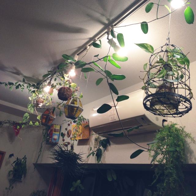 ダクトレール照明に鳥かごやグリーン