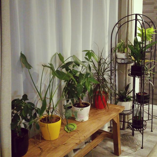 リビングのベンチの上に鉢植えを並べて飾る