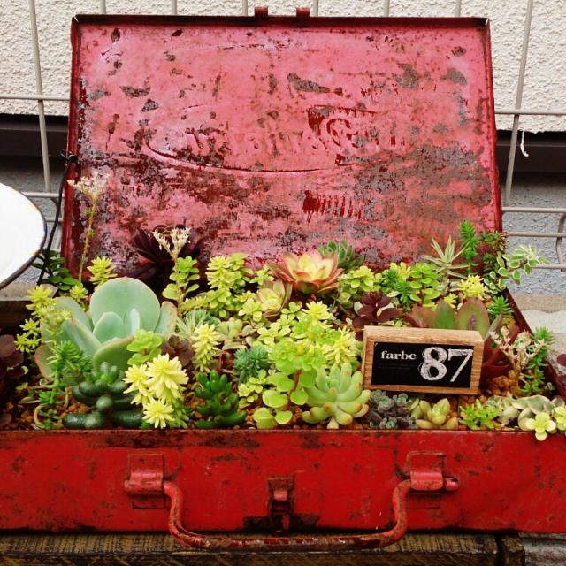 雨ざらしの工具箱に多肉植物寄せ植え