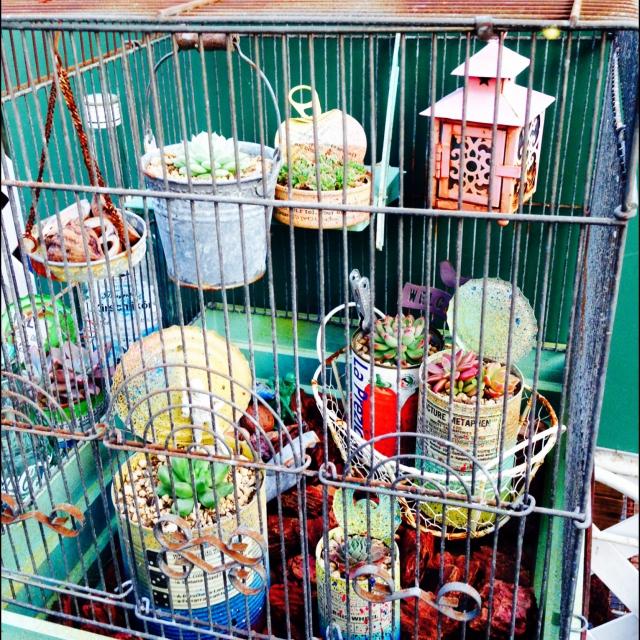 大きな鳥かごの中に多肉植物たち