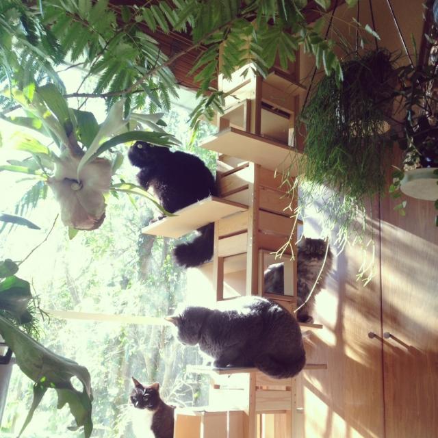 猫のびのび、家族くつろげる♡キャットタワーのあるお部屋
