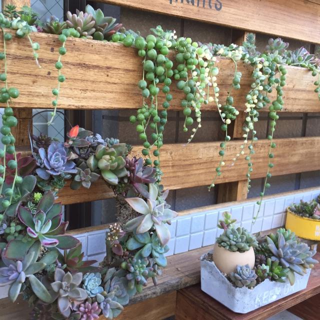 プニプニの多肉植物がかわいいリース