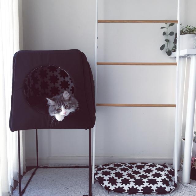 ペットとの暮らしがもっと楽しくなる!IKEAのペットアイテム