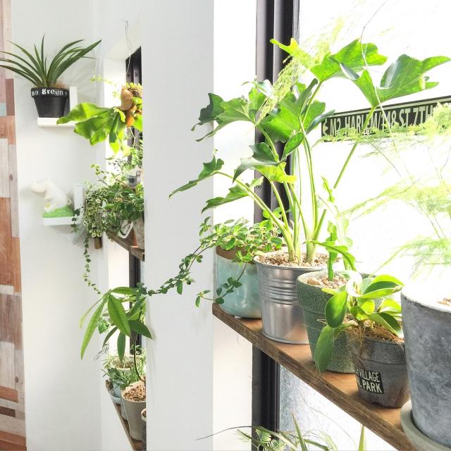 グリーンでお部屋を暖かく見せよう♪冬の飾り方特集