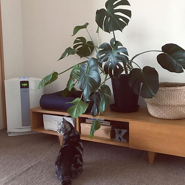 秋の花粉症対策で、室内環境をもっと快適に!