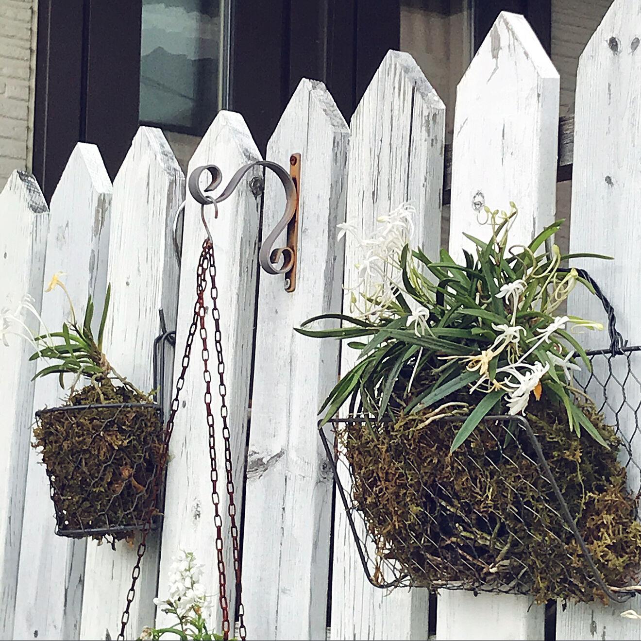 「ワイヤーメッシュラティスを曲げるだけでできる、壁・塀掛け植木カゴ」 by ayomoyuさん