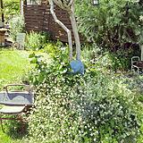ガーデン花の写真