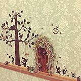 アリスのドアの写真