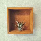shojiさんのお部屋の写真
