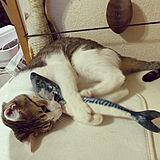 キャットタワー、猫Goods 犬、猫の写真