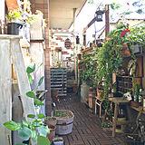 verandaの写真