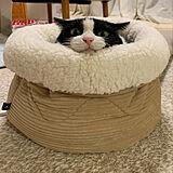 ネコちゃんの写真