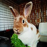cute animal♡の写真