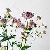 花と木のある風景の写真