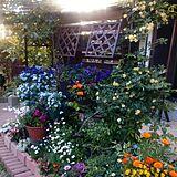 カラフルなお庭の写真