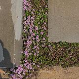 植物の写真