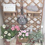 植物達の写真