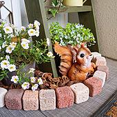 ダイソー/オブジェ/ガーデニング/DIY/花のある暮らし...などのインテリア実例 - 2021-05-15 10:48:00