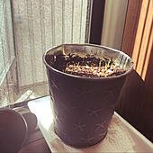 グレー/ブリキの鉢/種まき/ラグラス/縦滑り窓...などのインテリア実例 - 2021-09-22 16:10:47
