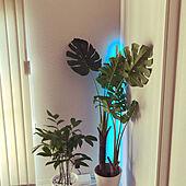 フェイクグリーン/ニトリ/観葉植物/ホワイトインテリアのインテリア実例 - 2021-07-25 17:27:10