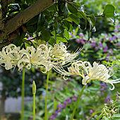 植物のある暮らし/季節を感じる暮らし/見てくれてありがとうございます♥/庭/ガーデニング...などのインテリア実例 - 2020-09-20 16:20:40
