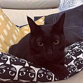 ねこのいる風景/IKEAの黒猫クッション/黒猫クッション/リビングのインテリア実例 - 2020-11-30 07:03:52