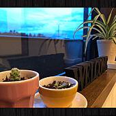 IKEA 雑貨/バストイレではありません⤵︎/グリーンに癒されてପ(⑅ˊᵕˋ⑅)ଓ/雑貨を楽しむ/育てるって楽しい♡...などのインテリア実例 - 2020-09-18 21:53:08