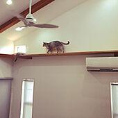 猫/シーリングファン/キャットウォーク/吹き抜けリビング/FIX窓...などのインテリア実例 - 2020-08-04 22:56:49
