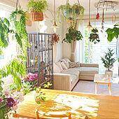 フェイクグリーン/リビングインテリア/NO GREEN NO LIFE/吊るし観葉植物/植物のある暮らし...などのインテリア実例 - 2021-05-11 08:45:26