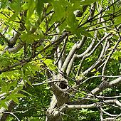 北欧/木が好き/ナチュラル/アンティーク/DIY...などのインテリア実例 - 2021-06-13 14:04:05