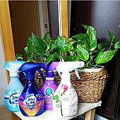 玄関/入り口/除菌/植物のある暮らし/観葉植物のある暮らし/観葉植物のある生活...などのインテリア実例 - 2020-10-22 13:52:39