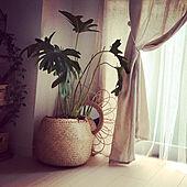 マイルーム/私の部屋/生成色のカーテン/生成り色/チュールレースカーテン...などのインテリア実例 - 2021-06-20 16:29:06