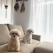 スワッグ手作り/ドライフラワーのある暮らし/ニトリのソファー/愛犬との暮らし/リビングのインテリア実例 - 2021-06-04 20:45:29