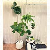 ホスクリーン/ネフロレピスツデー/モノトーンインテリア/植物のある暮らし/観葉植物のある暮らし...などのインテリア実例 - 2021-05-26 20:54:10