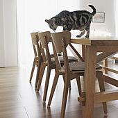 椅子/一条工務店/平屋/IKEA/北欧...などのインテリア実例 - 2021-06-19 20:48:31