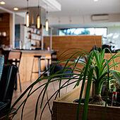グリーンのある暮らし/グリーンインテリア/カフェ風インテリア/植栽/アウトドアリビング...などのインテリア実例 - 2021-09-25 09:05:31