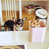 仲良しペット/犬との暮らし♪/明るい部屋/明るい家/ハムスターのいる暮らし...などのインテリア実例 - 2021-07-23 17:49:06