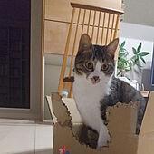 リビング/ねこのいる風景/ねこ/ひとり暮らし/保護猫...などのインテリア実例 - 2021-02-15 20:56:27