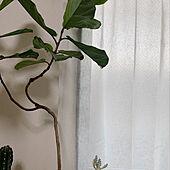 ゴムの木/植物のある暮らし/賃貸/ホワイトアンティーク/ホテルライク...などのインテリア実例 - 2020-04-08 15:07:22