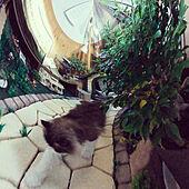 部屋全体/猫のいる暮らし/猫と暮らす/ミニチュア雑貨/観葉植物...などのインテリア実例 - 2021-09-25 21:49:34