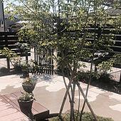シンボルツリーはアオダモ/デッキガーデン/平屋/一人暮らし/玄関/入り口のインテリア実例 - 2021-04-21 10:10:50