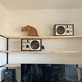 ねこと暮らす/猫が好き❤︎/猫のための棚/リビングのインテリア実例 - 2021-07-30 15:23:00